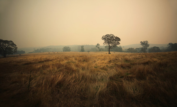 jessica tremp - house of cards #field #fog #tree #photography #jessica #tremp