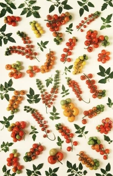 Tomatoes! #tomatoes #pattern #vegetables