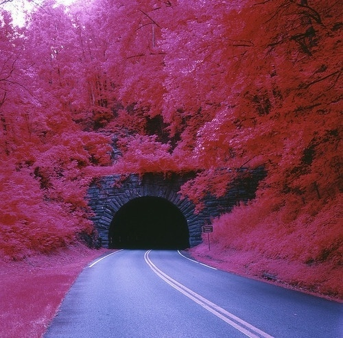 Cut+Paste » Tunnel Vision #pink #road #tunnel #photography #trees