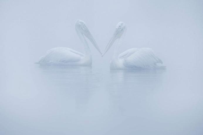 Brilliant Birds Photography by Jonas Classon