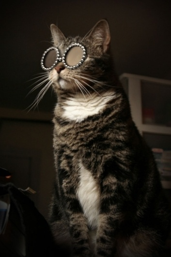 Kitty Superstar - O-OÂ Â |Â Â Cute adorable cats posted daily #fashion #sunglasses #cat #kitty