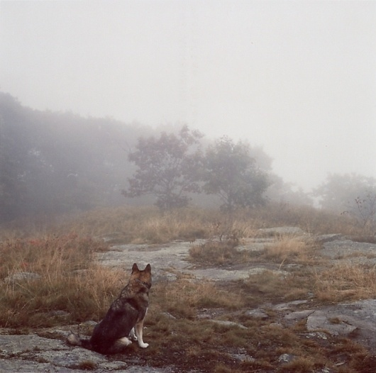 Mikael Kennedy #wilderness #photography #dog
