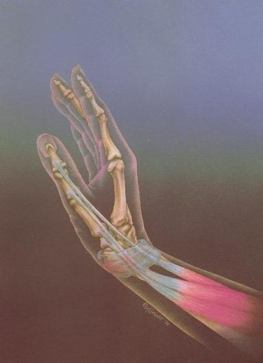 reblololo.tumblr #anatomy #hand #illustration #art #bones #drawing