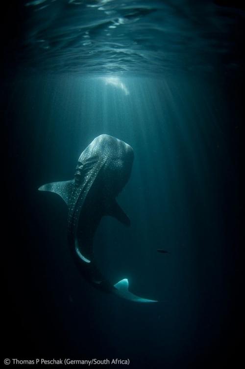 Wildlife Photographer of the Year 2012 #wildlife #photography #nature