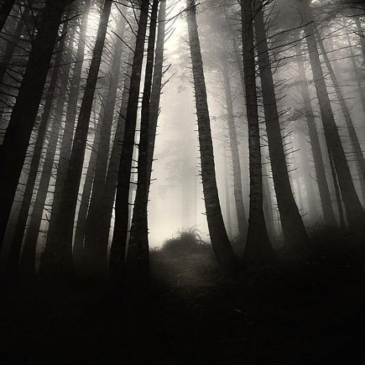 find me, photography by Ebru Sidar #forest #foog