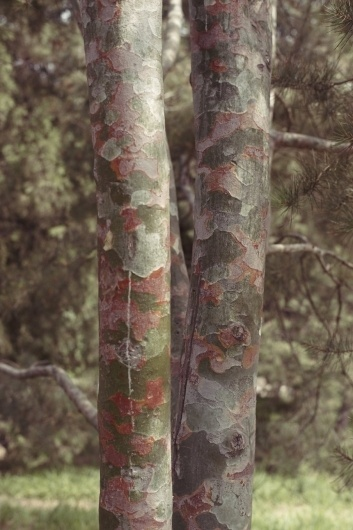 M O O D #photography #pattern #art #nature