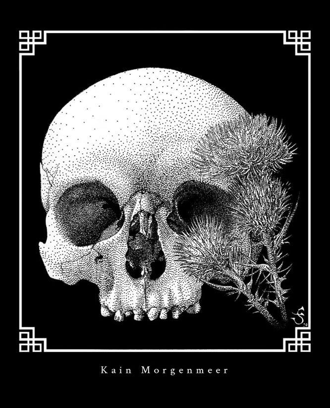 Skull and plumeless thistles / Vanitas II by KainMorgenmeer