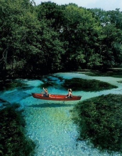 Tiffany Denise #plants #water #clear #greenery #travel #canoe #places