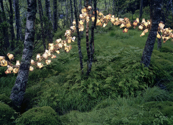 New Rural Light and Book Installations by Rune Guneriussen #lamp #photo #nature #forest #light