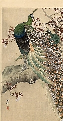 coqueterías - FFFFOUND! | JAPAN PRINT GALLERY: Peacocks #peacock #print #japan