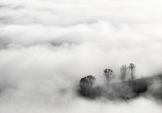 Andrei Baciu | Photogralysm | Winterly Haiku 6717 #forest
