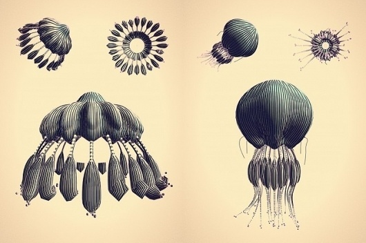 NTHN blog #jellyfish #generative