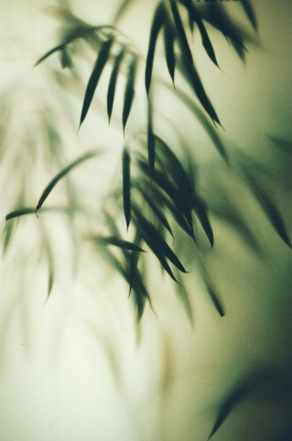 Les Intentions FantaisistesMarion Berrin #concept #photography #art #nature