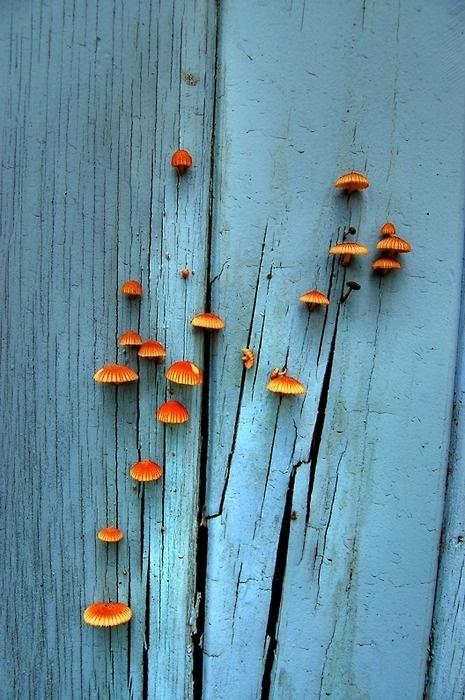 tumblr_lx183fxJKp1qei7a7o1_500.jpg 465×700 píxeis #blue #nature