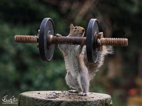 Squirrel Warhol by Max Ellis #inspiration #photography #animal
