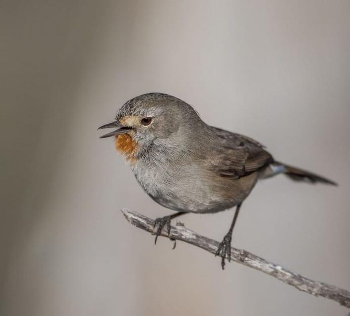 #birdstagram: Striking Bird Photography by Michael Jury