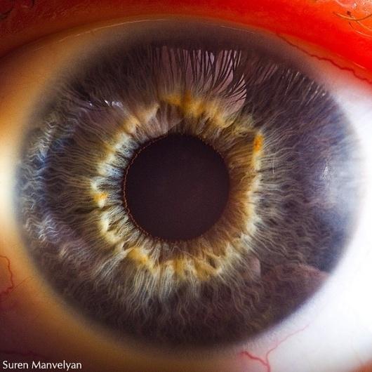 Your beautiful eyes on the Behance Network #eye #manvelyan #photography #suren #macro