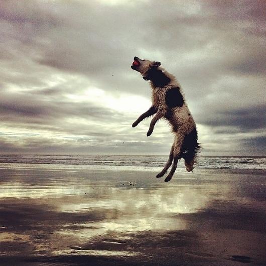 Reality « Amer Creative #sky #photography #jump #dog