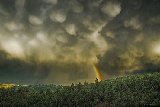 Touch The Sky | Flickr - Photo Sharing! #clouds #sky #robin #wilson #photography #rain #storm #forest #rainbow