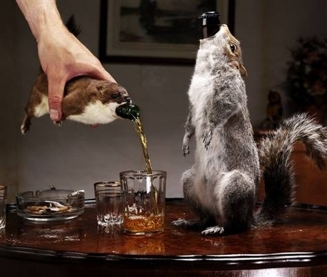 Taxidermy Squirrel Bottle Covers #beer #squirrel #taxidermy #party