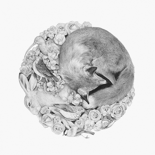 Miss Moss : Art #fox #sleeping #illustration #la #circle #rabbit #ronde #sketch