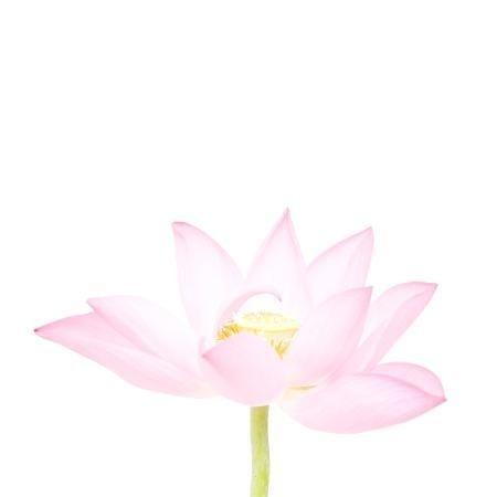 MA28 #flower #photography