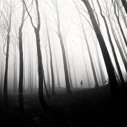 Ghost Of Perdition, photography by Christophe Dessaigne #forest
