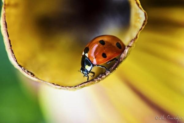 Macro Photography #inspiration #photography #macro