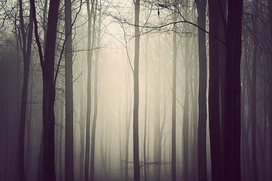 The Trees on the Behance Network #holtermand #kim #misty #dim #forest #light #tress