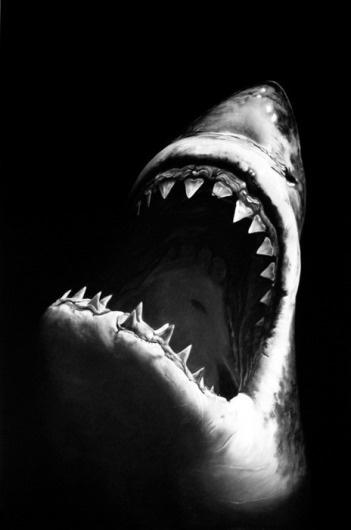 tumblr_m00ezgRgez1qza3tao1_500.png (464×700) #shark