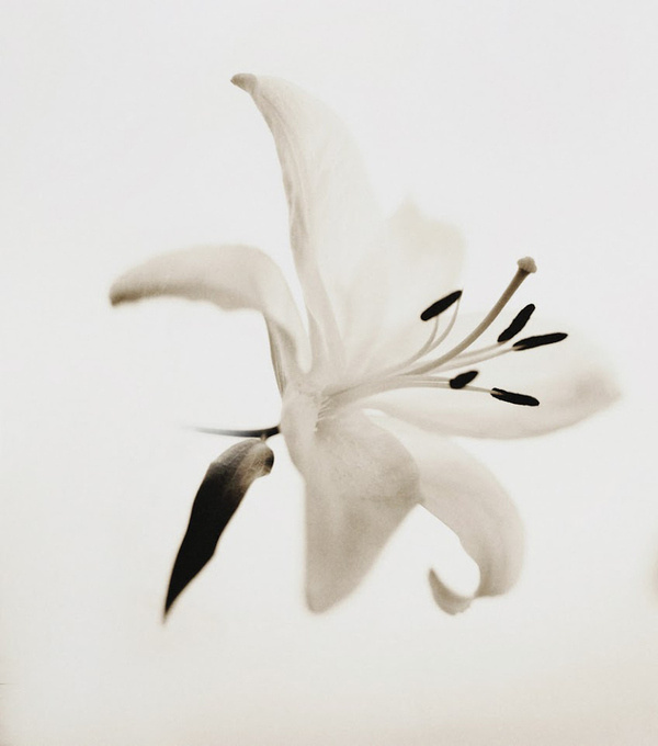 Photograph Pola Flower type 55 by Andy Lee on 500px #white #sepia #photo #& #black #photography #flower