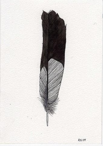 FFFFOUND! | Tumblr #feather