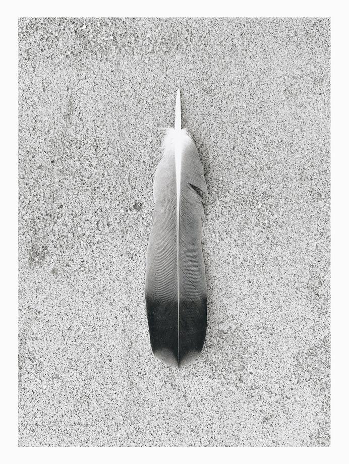 #feather #gradient #texture #find PHOTOGRAPHIE © [ catrin mackowski ]