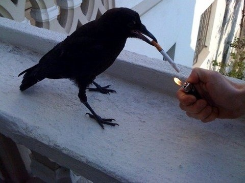 FFFFOUND! | rara avis in terris #smoking #raven