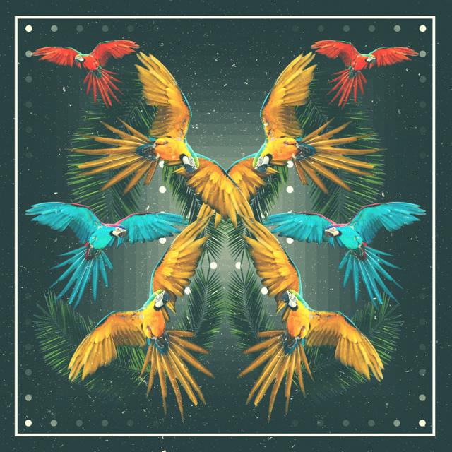 macaw. #palms #macaw #tropical #paradise #birds