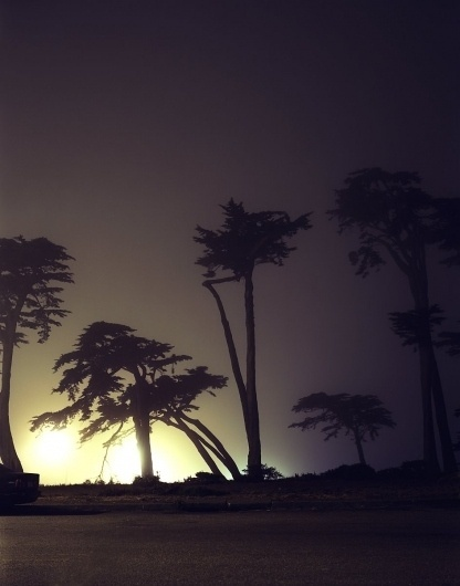 SF-tree.r.jpg (image) #los #evening #night #photography #angeles