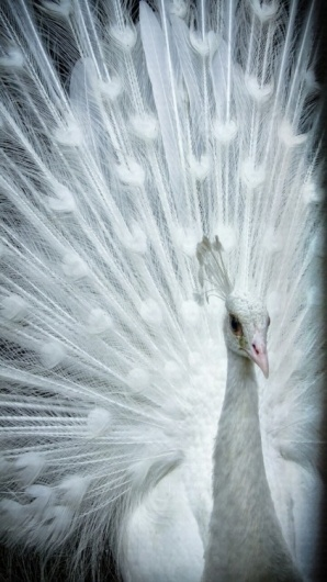 Merde! - Photography #photography #animals