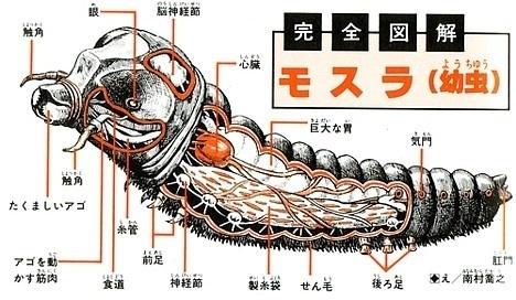 Kaiju anatomical drawings ~ Pink Tentacle #movie #japanese #anatomical #mothra #monster