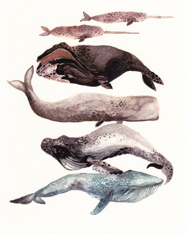 Whales, watercolor #fish #illustration #animals #watercolor #whales