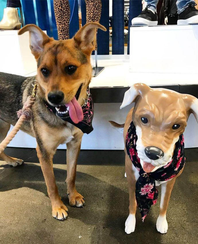 Most Dog Friendly Stores in America - Old Navy