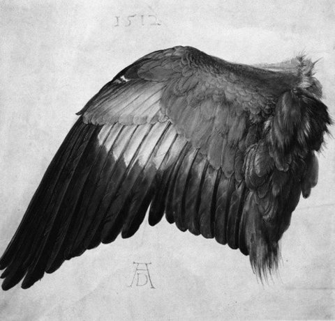 FFFFOUND! #white #1500s #black #bird #photograph #wing #and