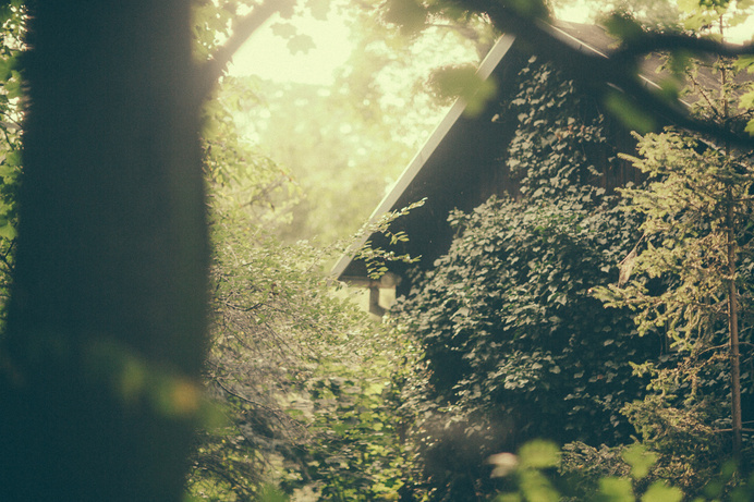 BART6563 #house #photo #nature #magic #green