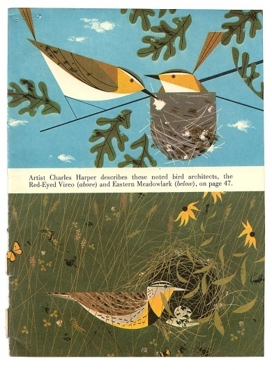 All sizes | American Bird Architects, Ford Times, Nov 1959 | Flickr - Photo Sharing! #book #birds #illustration #harper #charles