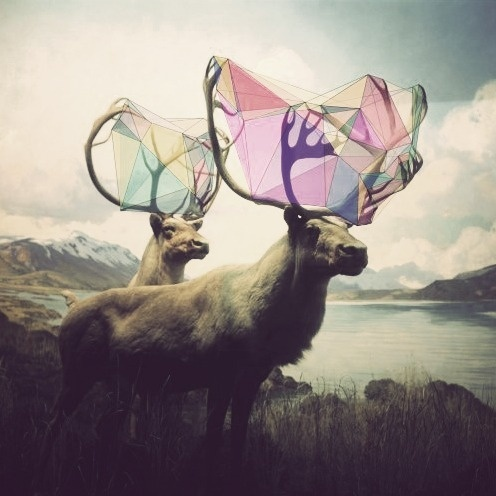 Uut Poetry — Day of Moves It is a day of moves. The moves go... #antlers #deer #geometry #animas #photo #color #elk #shape