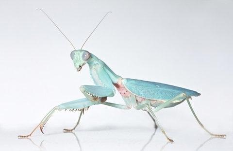 FFFFOUND!   Mediocre at best #mantis