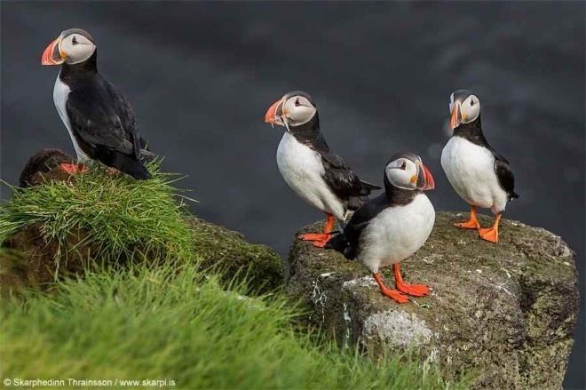 Nature Photography by Skarphedinn Thrainsson #inspiration #photography #nature