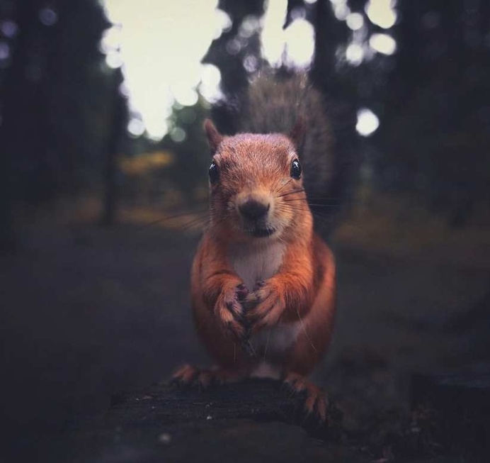 Portraits of Squirrels, Birds and Foxes by Animal Whisperer Konsta Punkka
