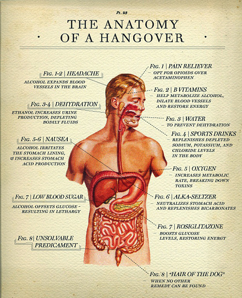 Refresh browser to see image! #design #anatomy #poster #hangover