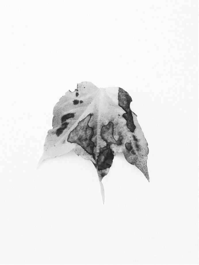 #autumn #leaf #plant #vsco PHOTOGRAPHIE © [ catrin mackowski ]