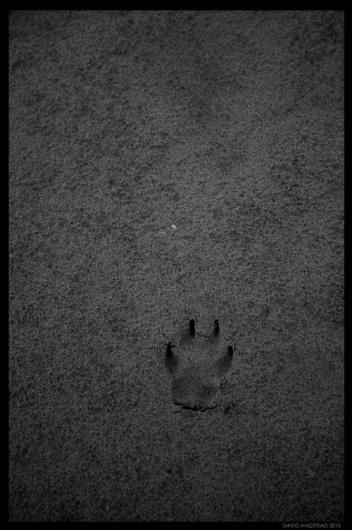 Photog - Society6 #paw #p #photography #sand #beach #grey